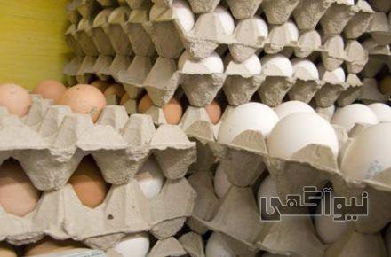 فروش مرغ صادراتی - 47